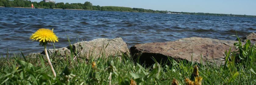 Laufen und Wandern um den Senftenberger See