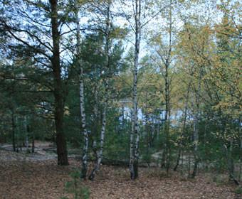Laufen im Herbst