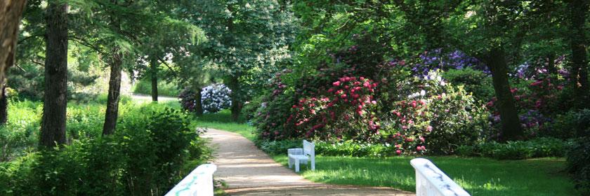 Idylle im Schlosspark von Senftenberg