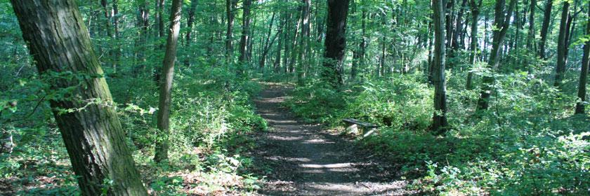 Laufstrecken im Niemtscher Park