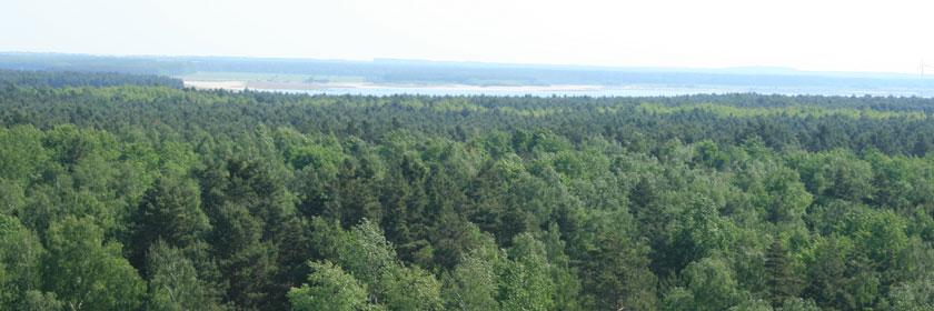 Viel Wald im Lausitzer Seenland