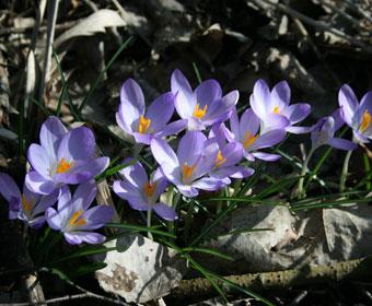 Joggen im Frühling